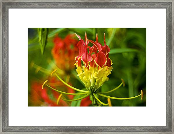 On The Porch At Hawkins House Framed Print