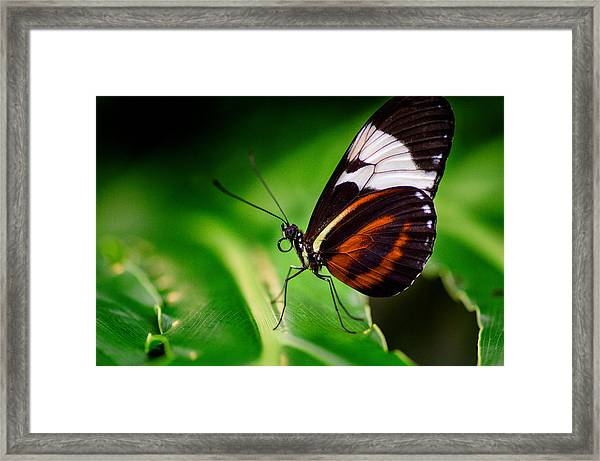 On The Wings Of Beauty Framed Print