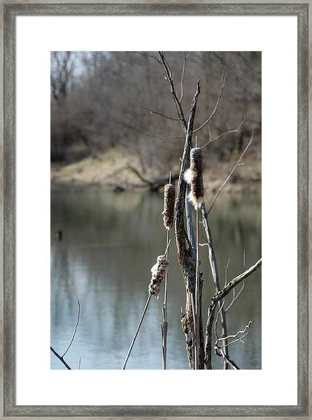 One Cold Day Framed Print