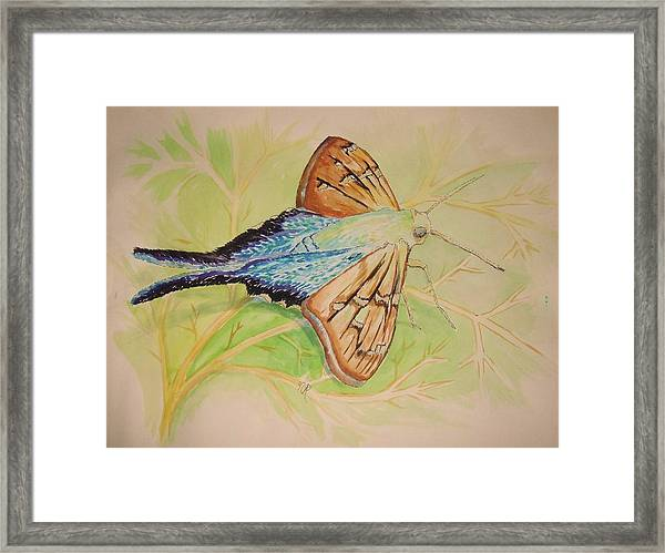 One Day In A Long-tailed Skipper Moth's Life Framed Print