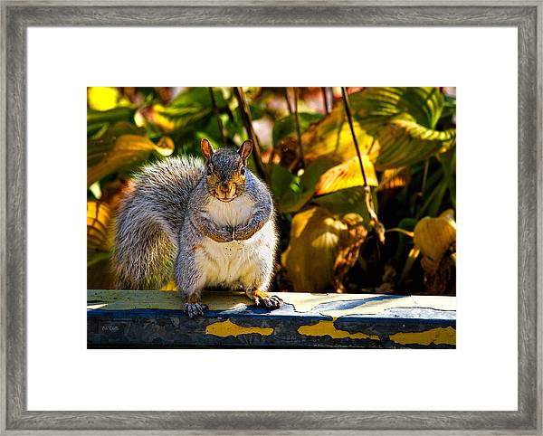 One Gray Squirrel Framed Print