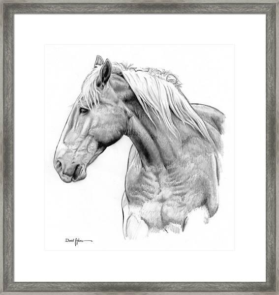 Da134 One Horse Daniel Adams  Framed Print
