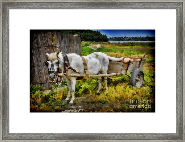 One Horse Wagon Framed Print