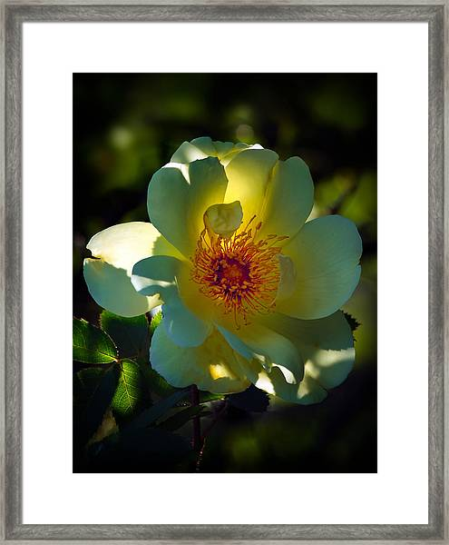 One Of The Last Framed Print