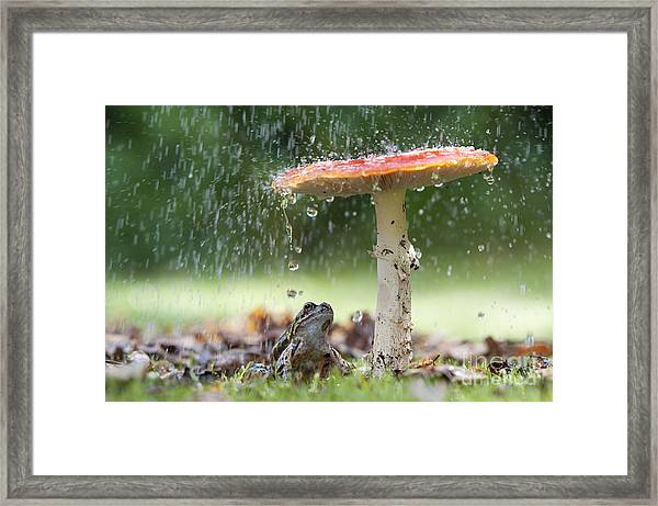 One Rainy Day Framed Print