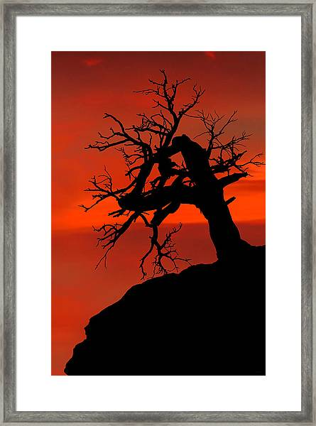 One Tree Hill Silhouette Framed Print