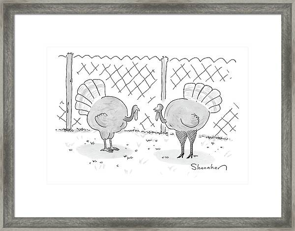 One Turkey Looks At His Friend Framed Print