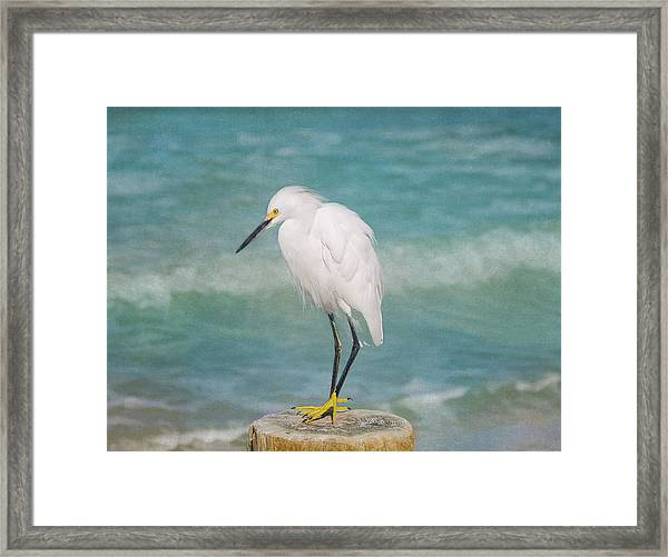 One With Nature - Snowy Egret Framed Print