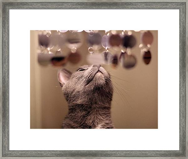oo Shiny Framed Print by Debbie Cundy