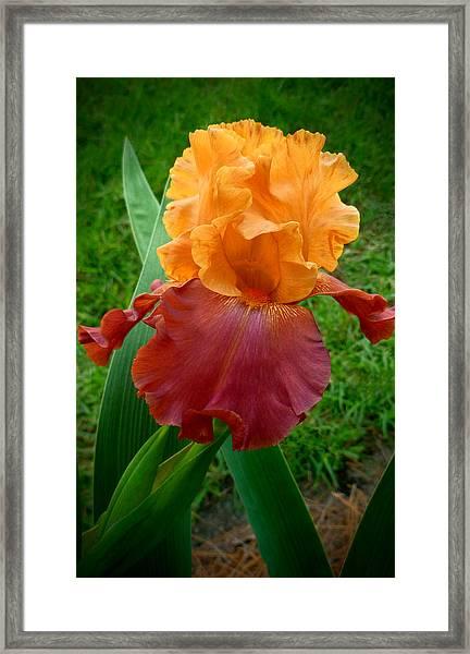 Opening Spring Framed Print