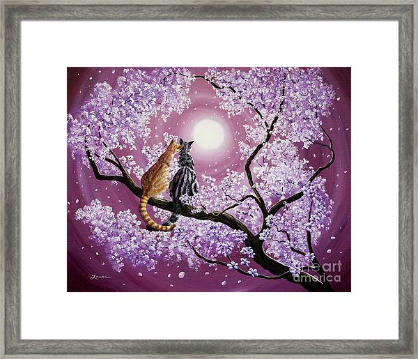 Orange And Gray Tabby Cats In Cherry Blossoms Framed Print