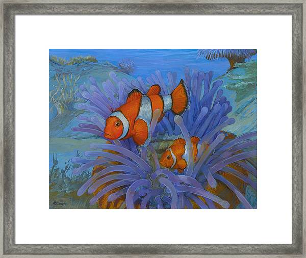 Orange Clownfish Framed Print by ACE Coinage painting by Michael Rothman