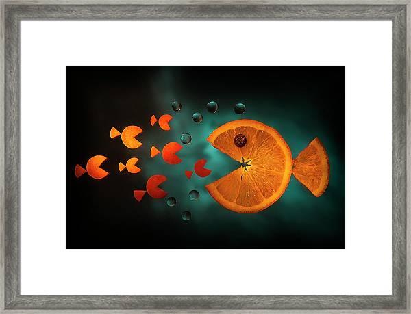 Orange Fish Framed Print