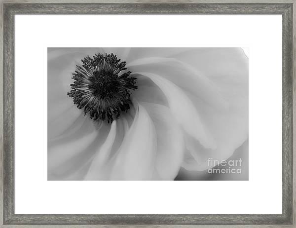 Orange Flower In Black And White Framed Print