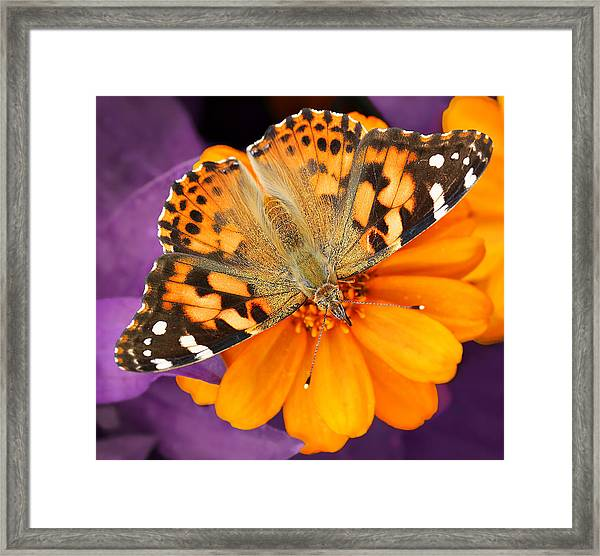 Orange On Purple Framed Print