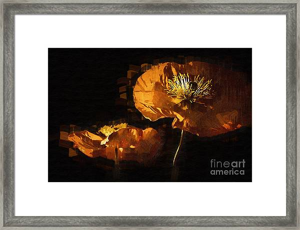 Orange Poppies Two Framed Print