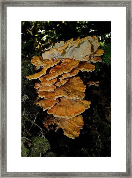 Orange Tree Fungus Framed Print