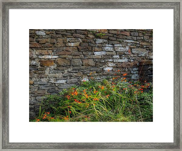 Orange Wildflowers Against Stone Wall Framed Print
