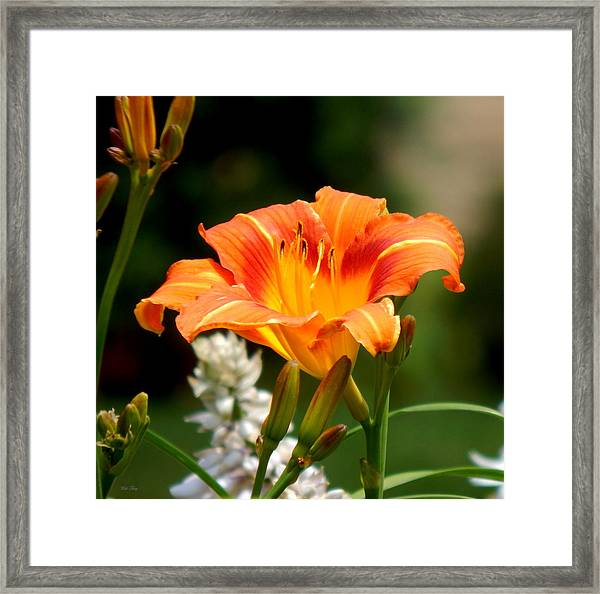 Orange And Yellow Glory Framed Print
