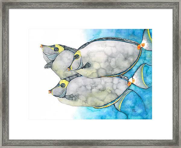 Orangespine Unicornfish Framed Print