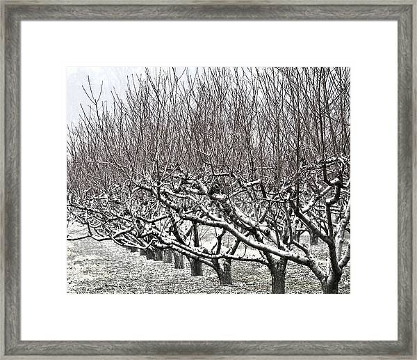 Orchard In Winter Framed Print