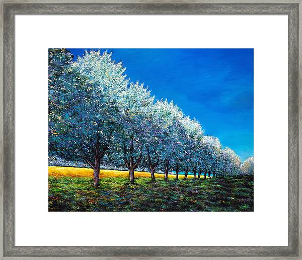 Orchard Row Framed Print