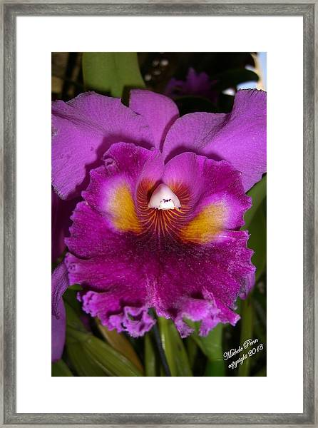 Orchid Flames Framed Print