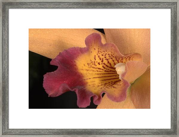 Orchid 479 Framed Print