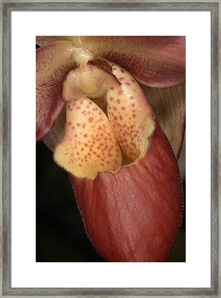 Orchid 490 Framed Print