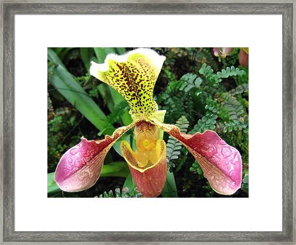 Orchid 5 Framed Print