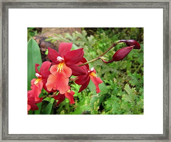 Orchid 6 Framed Print