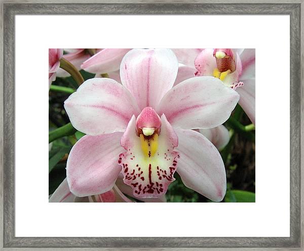 Orchid 8 Framed Print