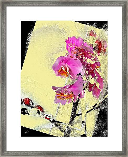 Orchid And Cream Framed Print by Martin Jay
