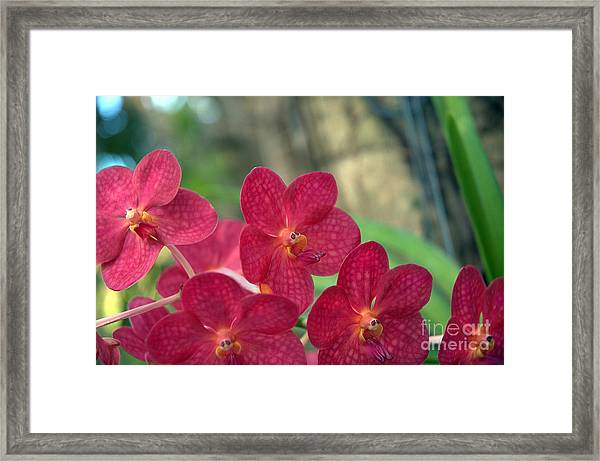Orchid Bugs Framed Print