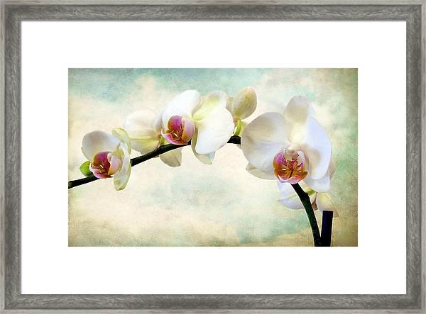 Orchid Heaven Framed Print