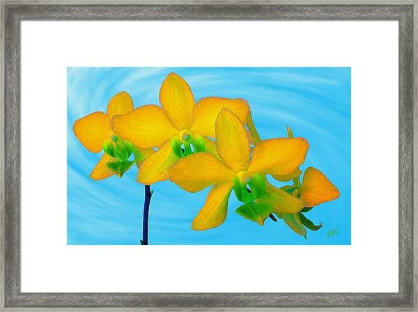 Orchid In Yellow Framed Print