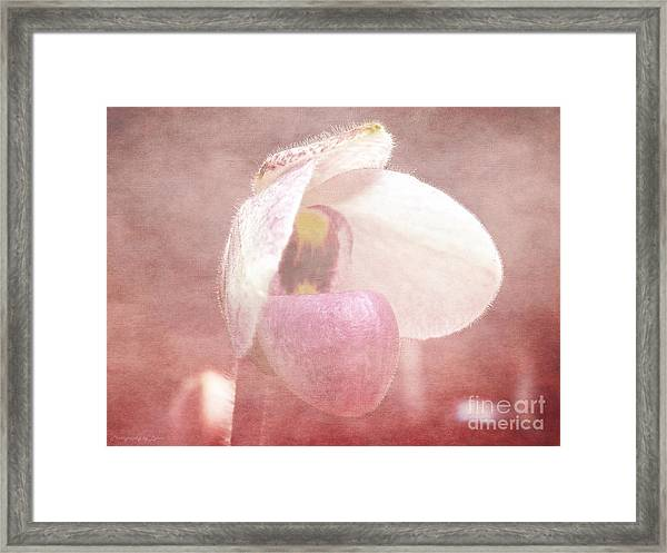 Orchid Softly Framed Print