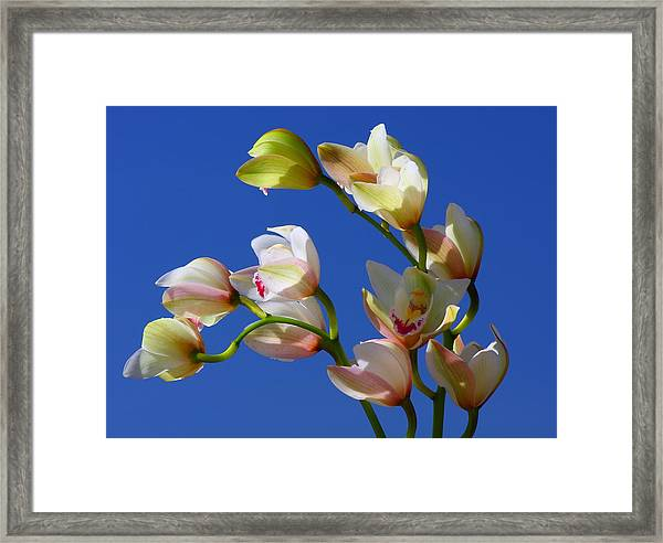 Orchids Against A Blue Sky Framed Print