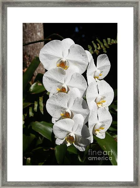 Orchids Anna Framed Print