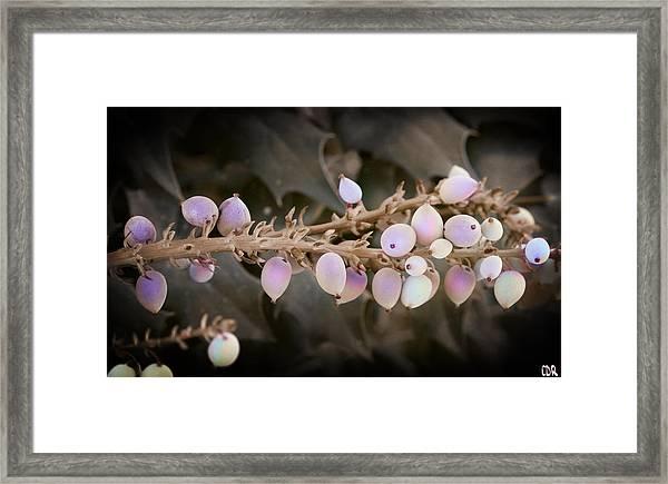 Oregon Fruit Framed Print