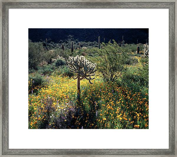 Organ Pipe Cactus National Monument Framed Print