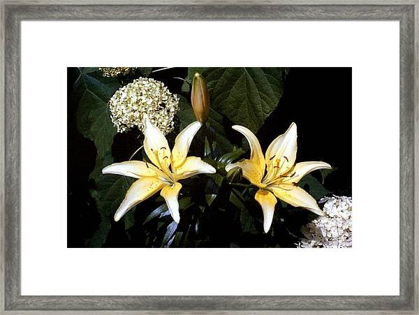 Oriental Lily Framed Print