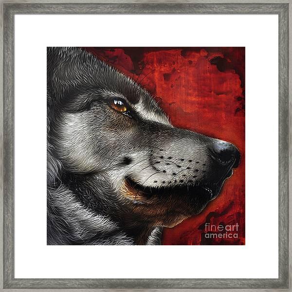Orion Wolf Framed Print