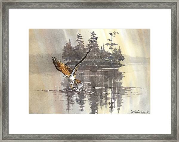 Osprey Hunting No.2 Framed Print