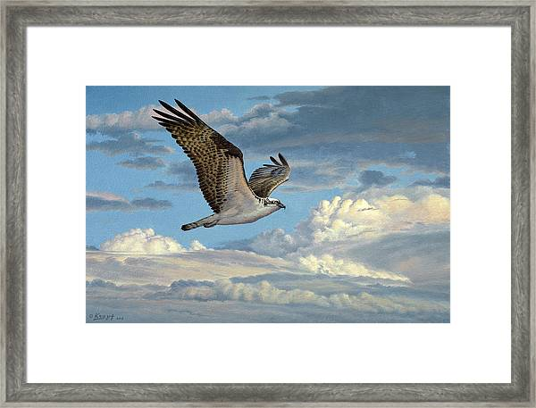 Osprey In The Clouds Framed Print by Paul Krapf