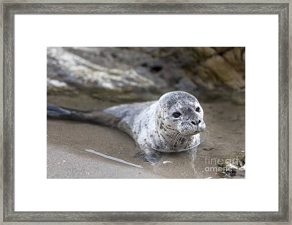Out For A Swim Framed Print