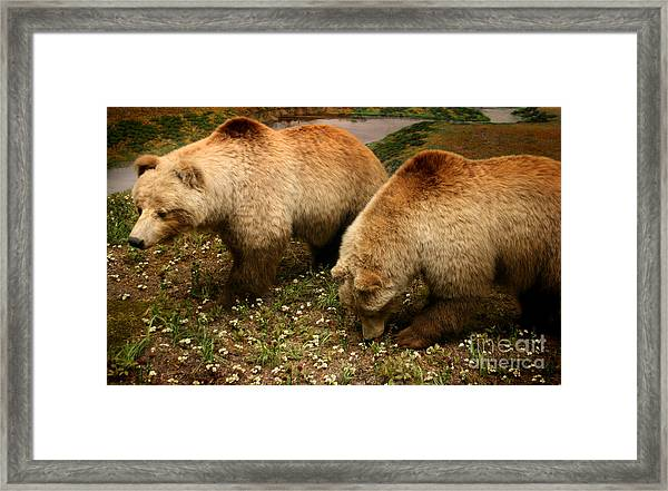 Out Of Hibernation Framed Print