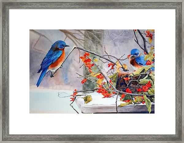 Out On A Limb Framed Print by Brenda Beck Fisher