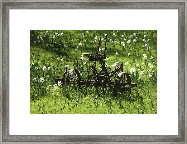 Out To Pasture 2 Framed Print