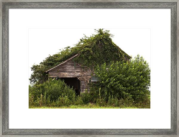 Overgrown By Green Framed Print